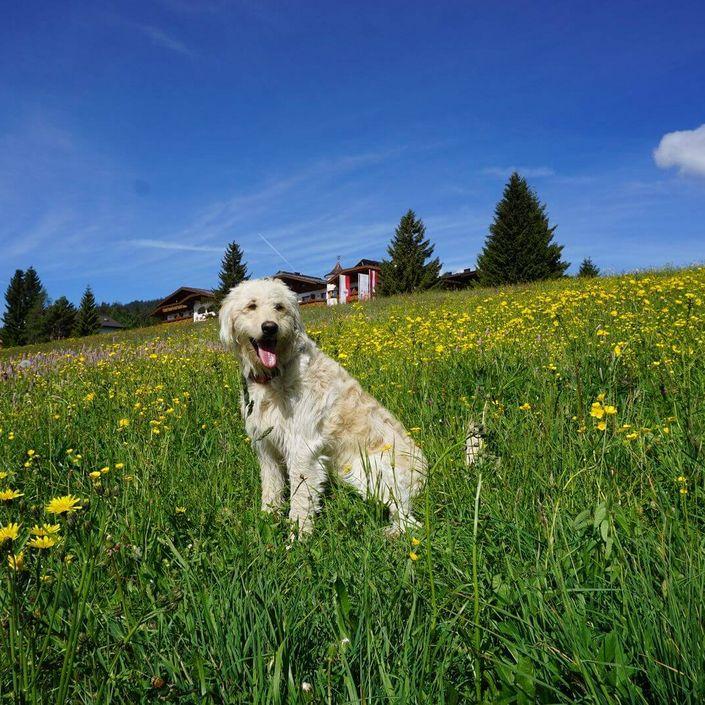 Hund sitzt in Blumenwiese