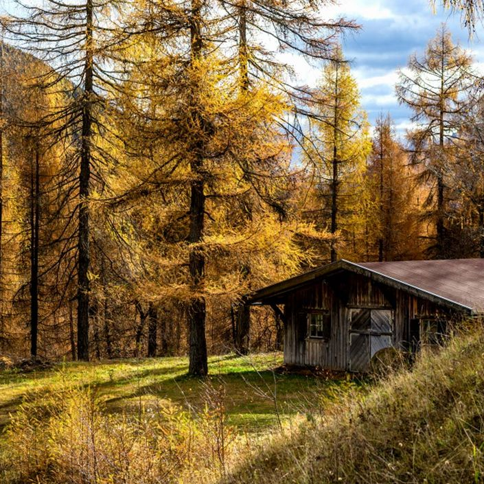 Goldener Lärchenwald im Herbst
